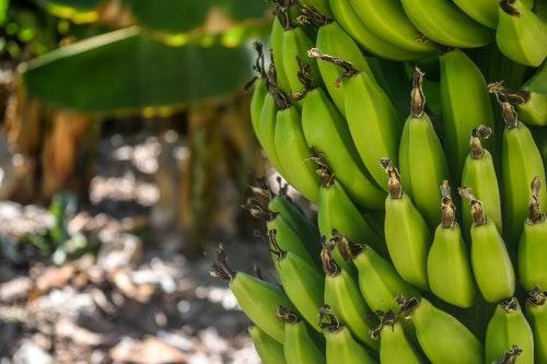Banánföldek